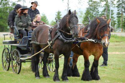trollheimen-ride-og-kjorelag-4